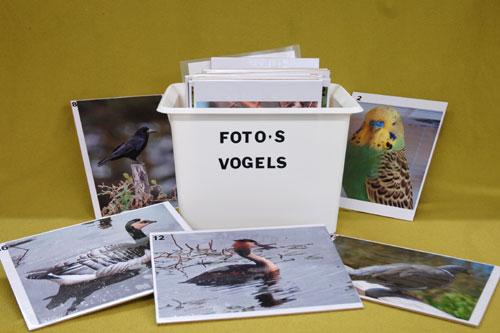fotoquiz-vogels