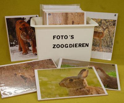 fotoquiz-zoogdieren